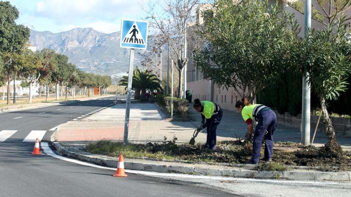El área de Medio Ambiente mejora las zonas verdes del vial de la Playa