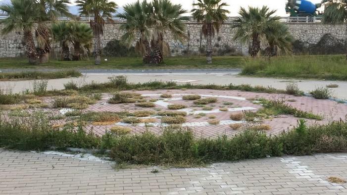 El Partido Andalucista denuncia el estado de abandono de las zonas ajardinadas del municipio